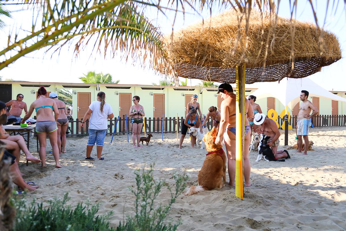 Corsi gratuiti di educazione per cani nella spiaggia per - Bagno 81 rimini ...