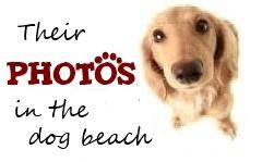 The bagno 81 dog beach in rimini - Bagno 81 rimini ...