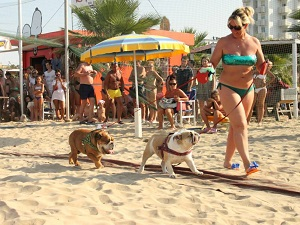 Sfila con il tuo cane in passerella nella spiaggia per cani a rimini - Bagno 81 rimini ...