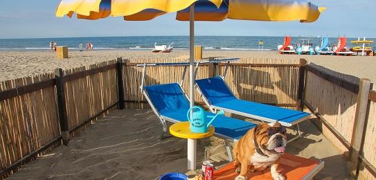 la spiaggia per cani del bagno 81 rimini dog beach